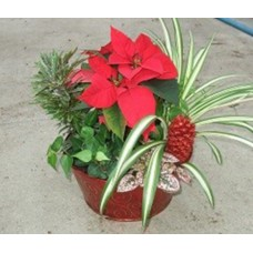 "10"" Christmas Planter - Mixed"