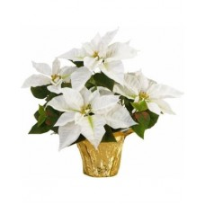 "4"" Basic Potted Poinsettia - White"